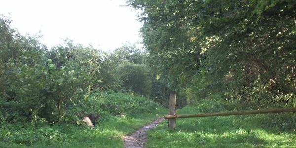 Unsere Route verläuft meist auf Wald- und Wiesenwegen.