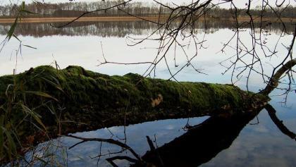 Totholz hat im natürlichen Stoffkreislauf eine enorme Bedeutung und muss deshalb geschützt werden.