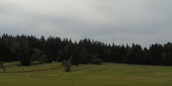 Ein weicher Wiesenweg führt über die Hochebene.