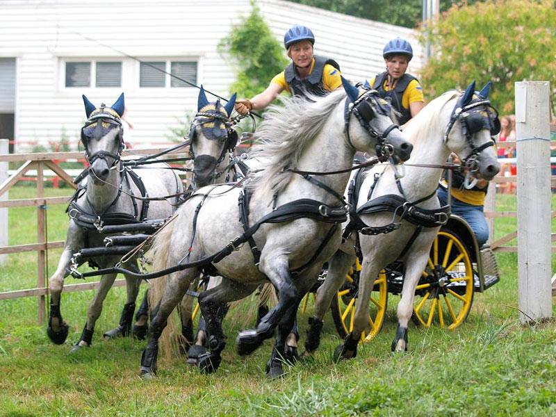 Familie Habel bei einem Turnier im Gespannfahren   - © Quelle: Pferdehof Habel
