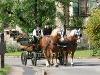 Kutschfahrten zu allen Anlässen   - © Quelle: Pferdehof Habel