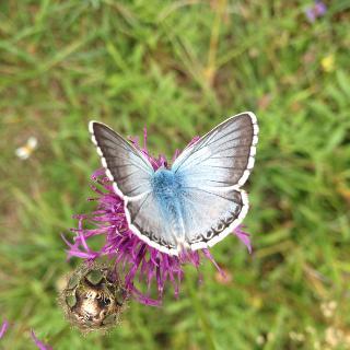 Bei Haselbrunn kann man wunderschöne Schmetterlinge beobachten.