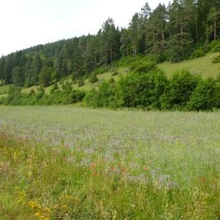 Naturschutzgebiet Stettener Halde