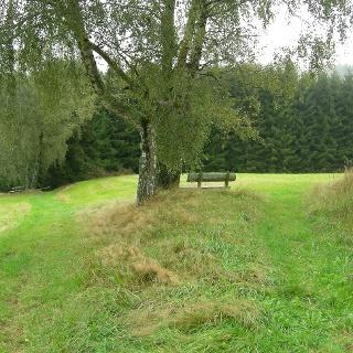 Unter einem Baum können wir verweilen und die Natur genießen.
