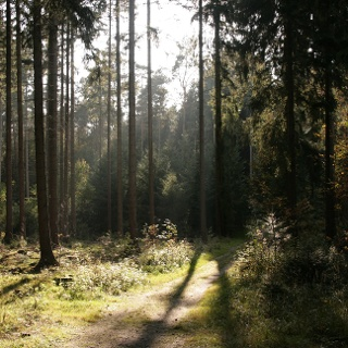 Lippspringer Wald