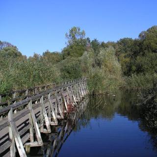 Eine Brücke führt über die Verlandungszone.