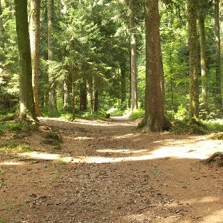 Schöne Waldwege begleiten unseren Weg.