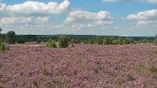 Von Behringen durch die Lüneburger Heide nach Wilsede