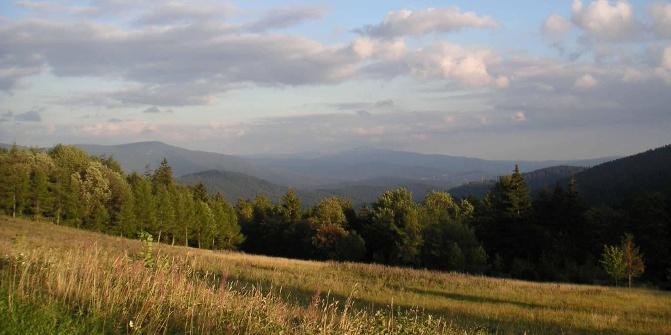 Vom Brennes führt ein langer Forstweg nach Bayerisch Eisenstein.