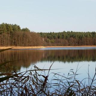 Der östliche Teil des Lübbesees gehört bereits zum Biosphärenreservat Schorfheide-Chorin.