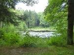 Foto Mit Seerosen bewachsener Teich am Naturlehrpfad
