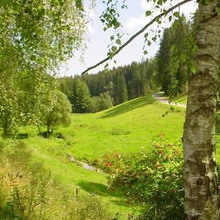 Im Zinsbachtal bei Pfalzgrafenweiler