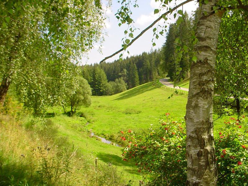 Pfalzgrafenweiler - Große Tannen und Bannwald
