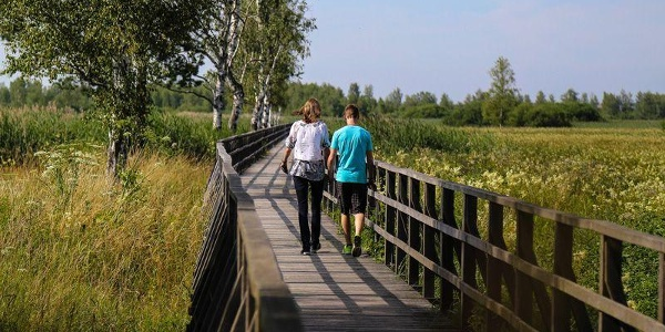 Steg in Bad Buchau