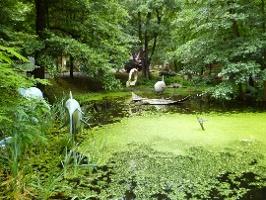 Foto Wasserlandschaft im Urzeitpark