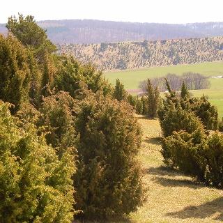 Das Wacholderschutzgebiet bei Alendorf.