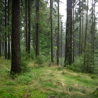 Waldesruh und Naturgenuss pur.