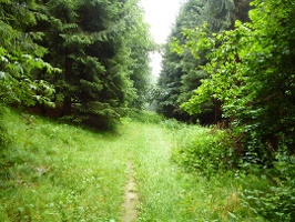 Foto Wiesenpfad im Wald
