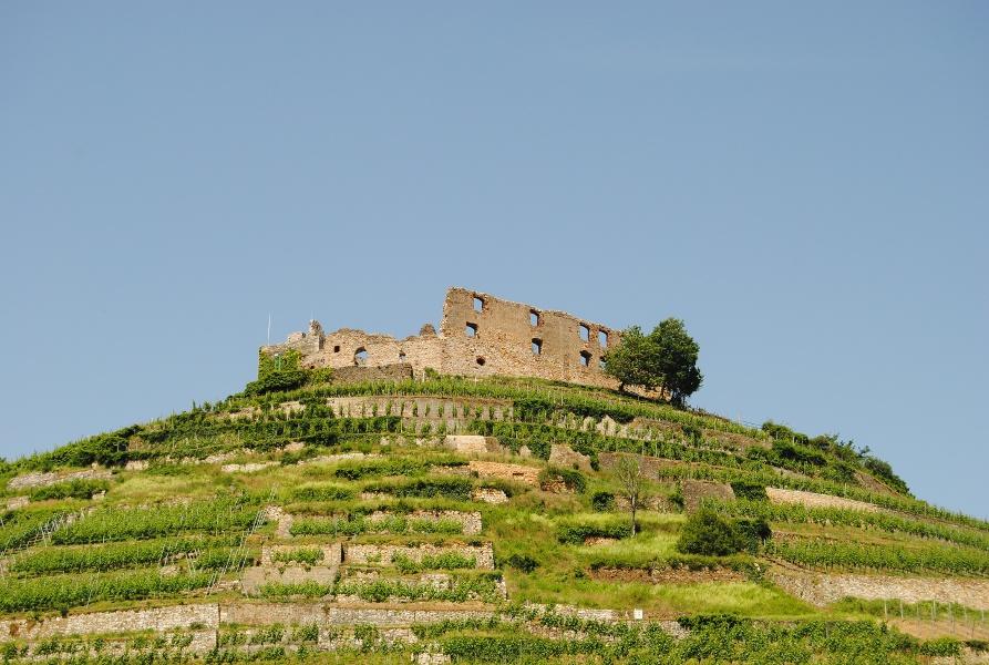 Radtour nach Staufen durch die Weinreben von Badenweiler aus