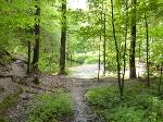 Foto Der Blick auf die Kirnitzsch begleitet die Wanderung auf dem Flößersteig