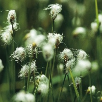 Das Wurzacher Ried besticht durch seine seltene Flora und Fauna.