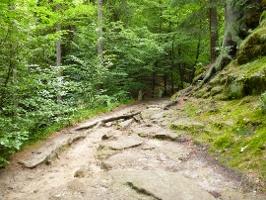 Foto Über Wurzelwege und Steinplatten zum Kuhstall