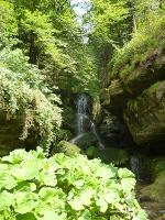 Foto Der Wasserfall von Gräser und Bäumen gesäumt
