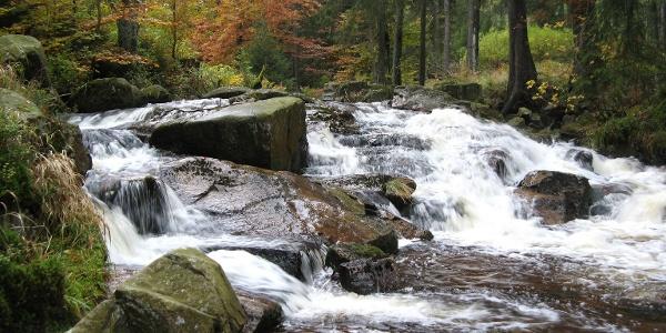 Wunderschön rauscht die Warme Bode durch den herbstlichen Wald.