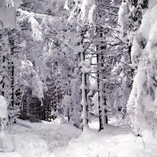 Tiefverschneiter Graben ins Tal