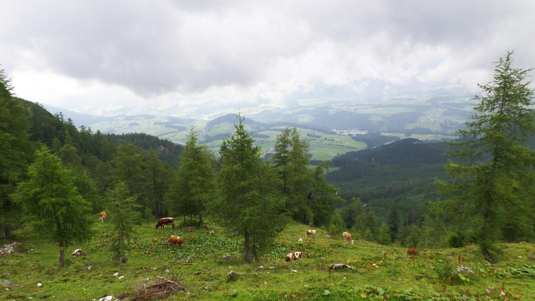 Ausblick auf Abtenau