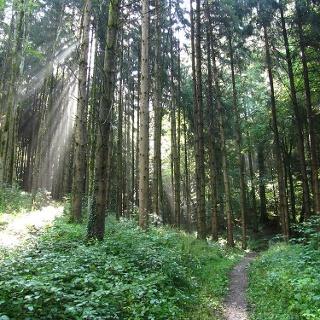 Jubiläumsweg des Schwarzwaldvereins