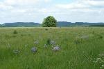 Auf den saftig grünen Wiesen wachsen unzählige bunte Blumen.