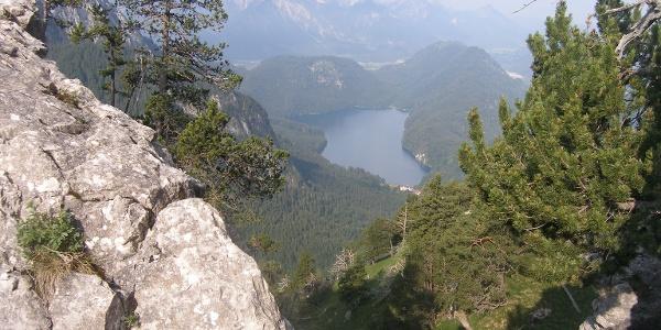 Ausblick auf den Alpsee