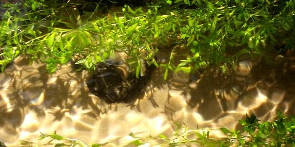 Sonnenstrahlen im Wasser des Furlbachs