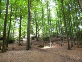 Foto Waldgebiete