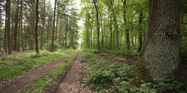 herrliche Waldpartie