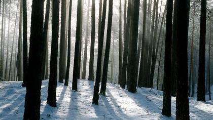Der Aufstiegsweg führt uns durch den Winterwald