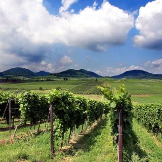 Ilbesheim an der Südlichen Weinstrasse - ein bisschen Toskana in Deutschland.