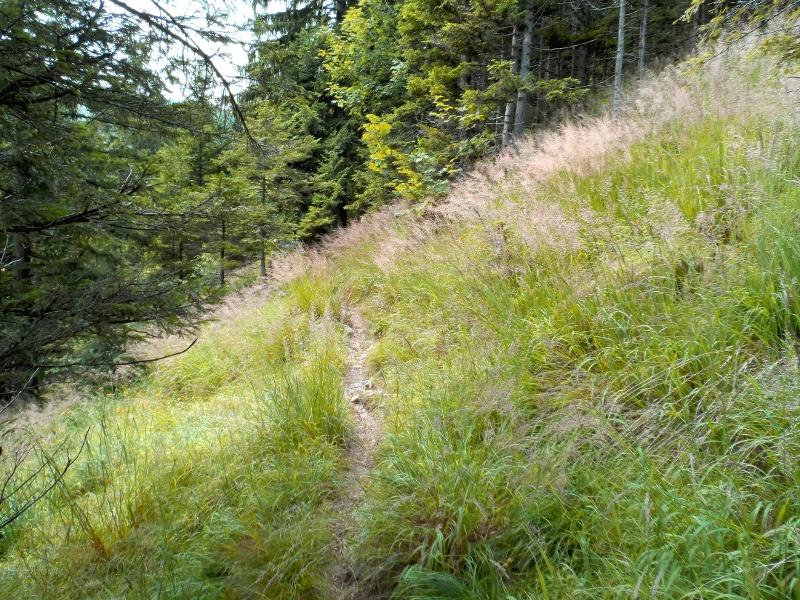 Wanderweg Farnbödenalm