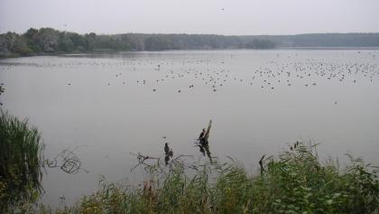 Der Warnker See bietet Heimat für viele Zugvögel.