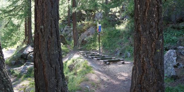 Meist im Wald und daher im Schatten gelegen