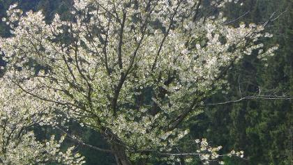 Ruhebank unter einem Apfelbaum.