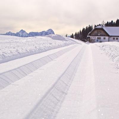 Rosstratten_Winter