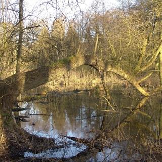 Der Bogensee bei Berlin-Buch