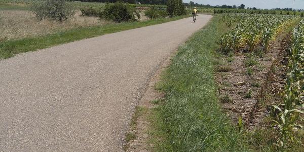Radweg gleich Straße nach Apetlon