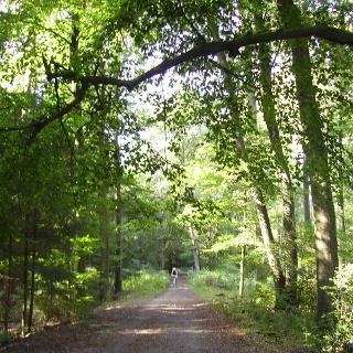 Europaradweg R1 im Holter Wald