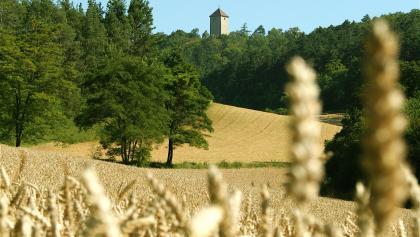 Beim Aufstieg erblicken wir schon den markanten Turm des Schlosses durch die Getreidefelder.