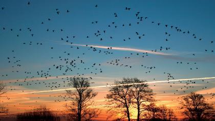 Bei der Tour können wir mit etwas Glück erstaunlich viele Vögel erleben.