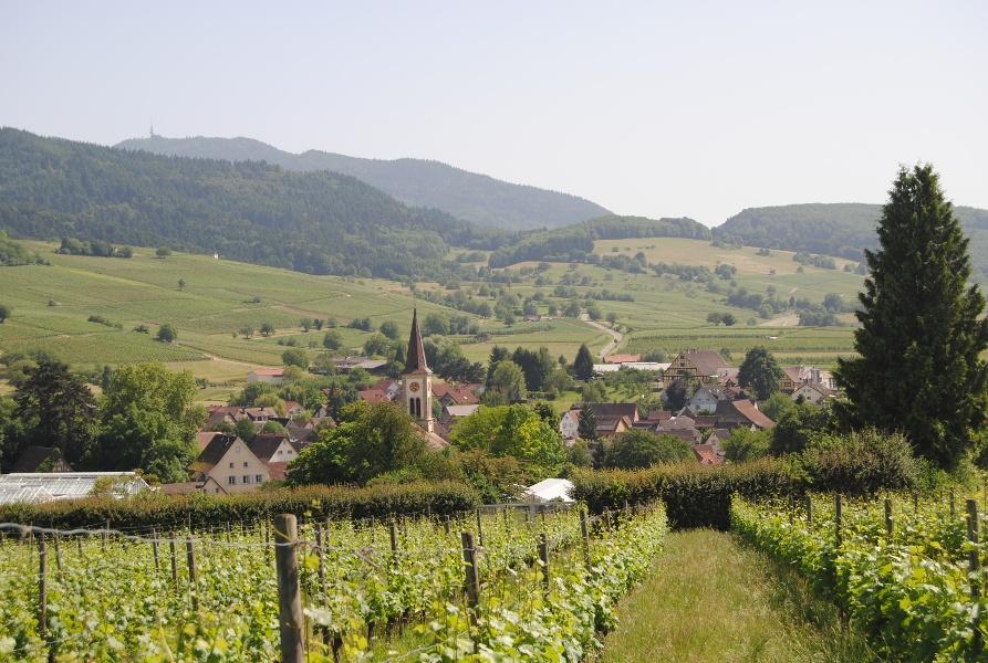 Rennrad Tour quer durch das Markgräflerland von Badenweiler aus Nr.1