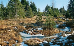 Naturromantik am Tiefenhäusener Moor.